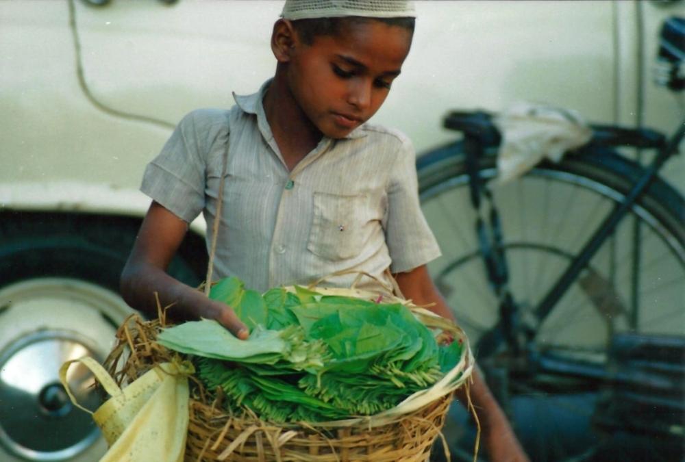 india-betel-leaves