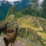 llamas Machu Picchu, Peru
