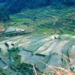 rice paddies Philippines