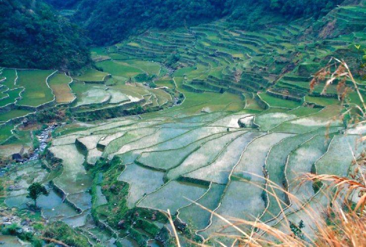 philippines-rice-e1497053339607