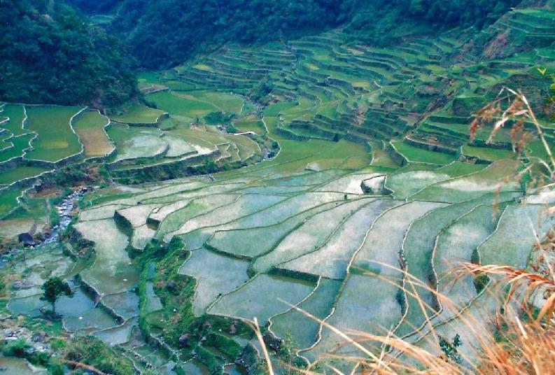 philippines-rice